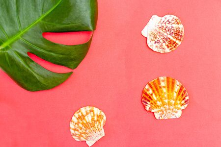 Leaf monstera and seashells on living coral background.