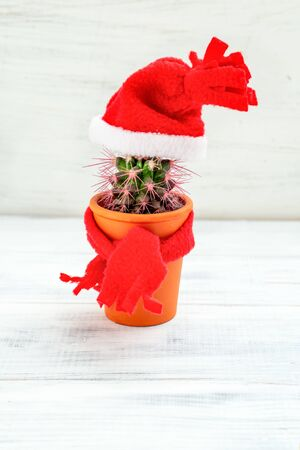 Cactus in santa hat on white wooden background. Vertical photo. Christmas Decorations On Cactus