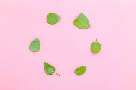 Dried eucalyptus leaves in the shape of a circle on pink background. Flat lay