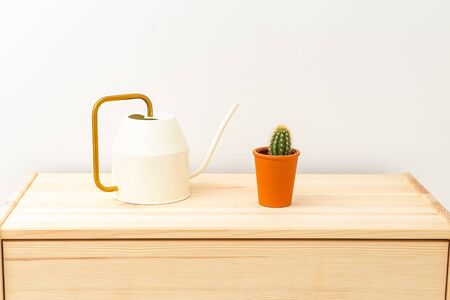 Cactus and watering can on a wooden shelf. Plant home decoration. Minimal