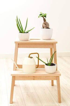 Aloe Vera and Bansai on a wooden stand at home. Garden room. Plant home decoration