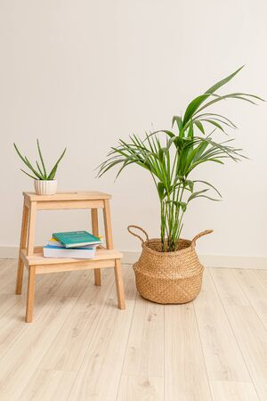 Plant howea and aloe vera with books. Vertical format. Plant home decoration 스톡 콘텐츠