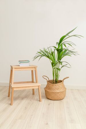 Plant howea in wicker basket and books. Vertical format. Plant home decoration 스톡 콘텐츠 - 148706093