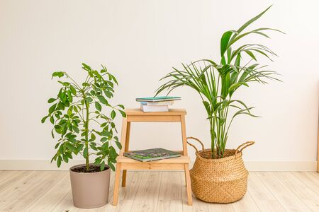 Home plants and wooden shelf with books. Harmony. Positive Emotion