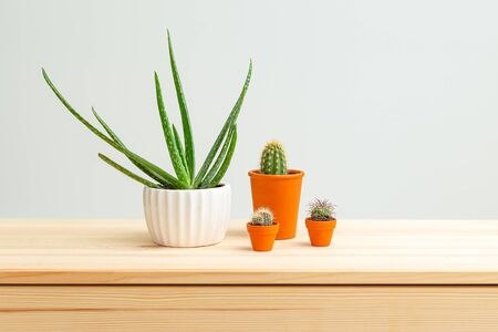 Houseplant. Aloe vera and cacti are on the wooden shelf of the house. Home gardening