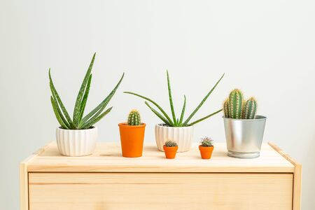 Houseplant.  Aloe vera and cacti on a wooden shelf. Garden room. Sustainable life style 스톡 콘텐츠
