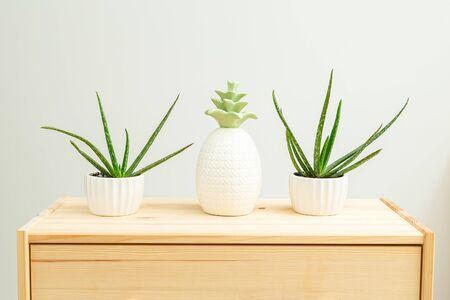 Houseplant. Aloe vera and cacti are on the wooden shelf of the house. Home gardening. White and green