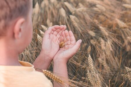 The boy holds a wheat ear in a palm. Wheat field. Reconnecting with nature.  Back to nature