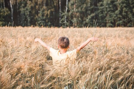 Wheat field. A boy walking on a wheat field. Reconnecting with nature.  Back to nature