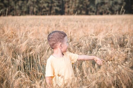 Boy playing in a wheat field.  Back to nature. Summer 스톡 콘텐츠