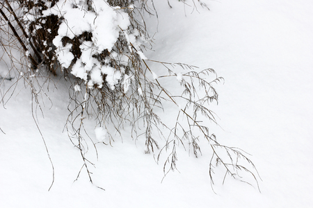 Tree in the snow close-up. Winter and snow. First snow. Beautiful tree. Cold. Frost. White Stock Photo