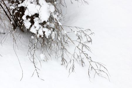 Baum in der Schneenahaufnahme. Winter und Schnee. Erster Schnee. Schöner Baum. Kalt. Frost. Weiß