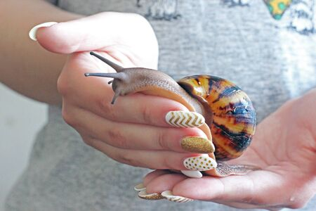 A snail is on the girls hand. Akhatins Snail Stock Photo