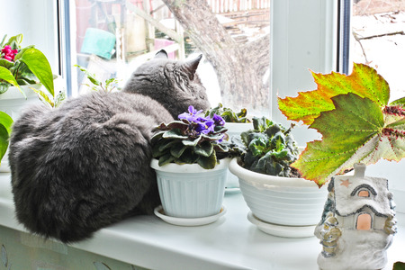 The cat sits on a window. Cat near the flowerpot