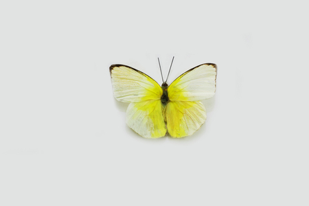 Butterfly on a clean background