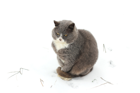 The cat on the street in the snow.