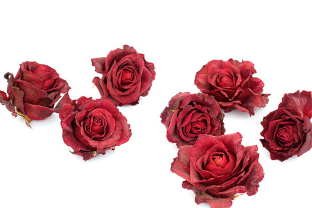 Sluggish red rose on a white background. Dried rose petals on white background. Flowers. Love. Imagens