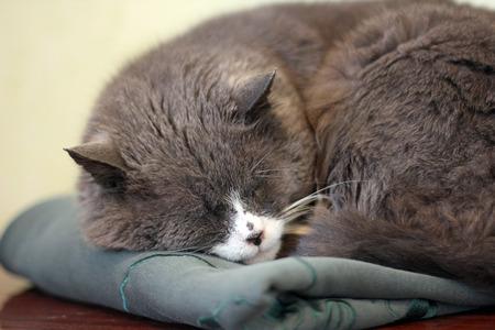 cat sleeps Stock Photo