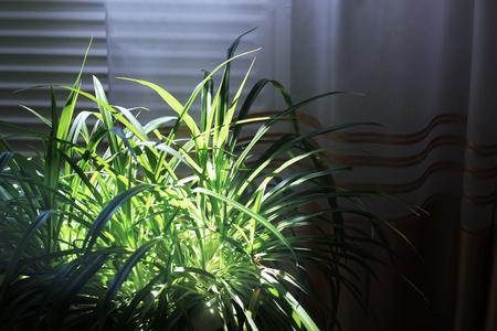 House plants. Flowerpot