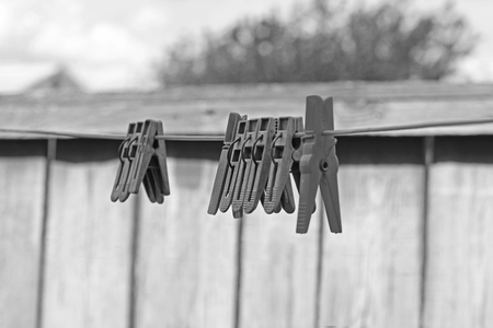 Clothes pegs. Black and white photo