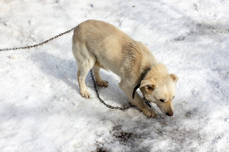The dog eats in the winter on the street