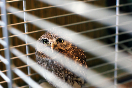 Beautiful owl in a cage. Owl close-up. Bird