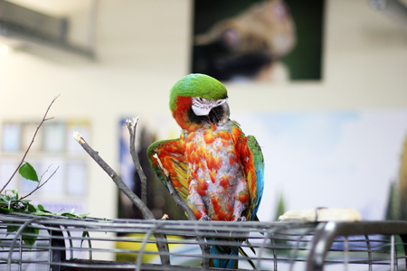Large colored parrot. Macaws. Birds 写真素材