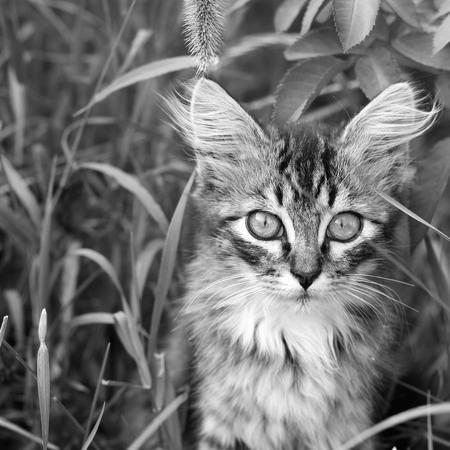 Cat in the grass 版權商用圖片