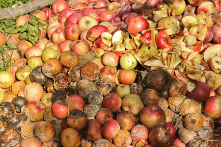 Rotten apples. Background Standard-Bild - 112734788