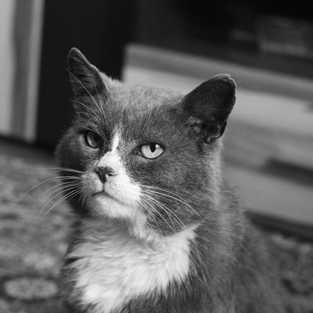 Beautiful cat. Black and white photo