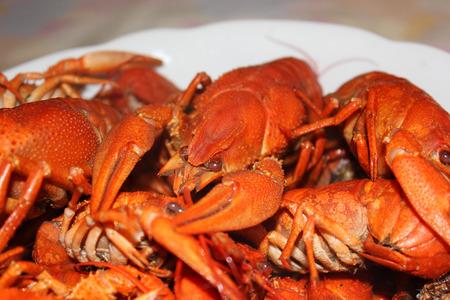 Boiled crayfish close up