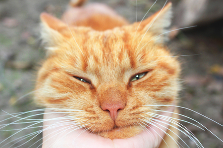 Cat close-up. Hand stroking a cat Standard-Bild - 112734774