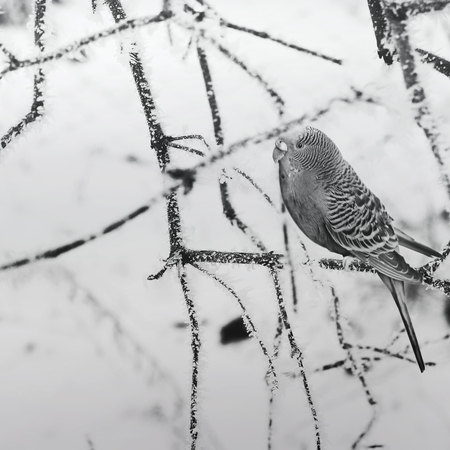 Parrot on a branch. Black and white photo. Nature