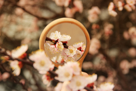 Flowers in the mirror reflection. Flowering tree. The tree blooms in the spring Imagens