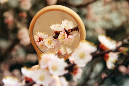 Flowers in the mirror reflection. Flowering tree. The tree blooms in the spring 版權商用圖片
