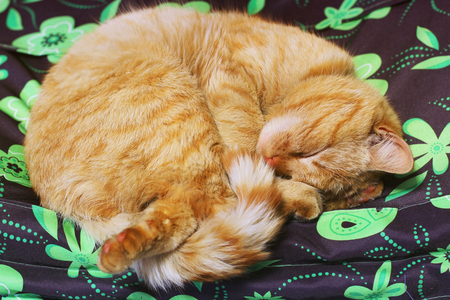 Beautiful red cat sleeping on the couch Banque d'images