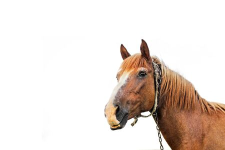 Beautiful horse on a white background. Horse close up