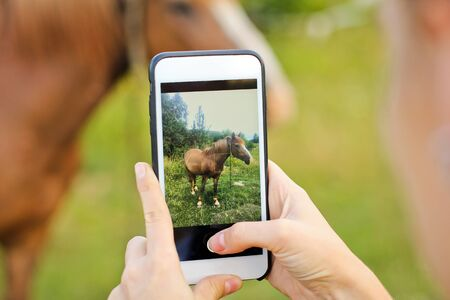 A girl takes pictures on the phone. Beautiful horse in the garden. Фото со стока