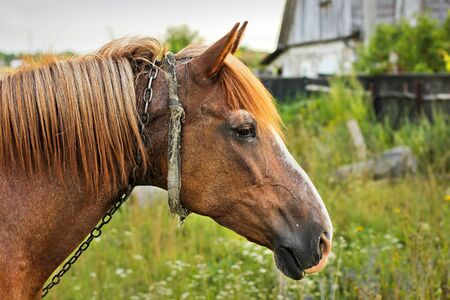 Beautiful horse in the garden. Horse close up