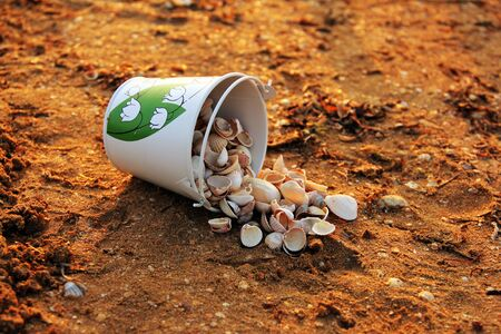 Seashells on the seashore. Seashells in a bucket Reklamní fotografie