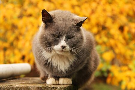 Cat on a background of autumn. Autumn Stock Photo