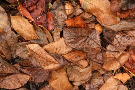 Background from sluggish leaves. Autumn. Wet leaves Imagens