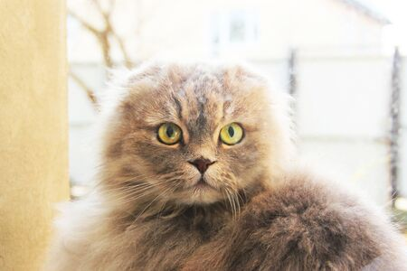 Beautiful cat near the window. Cat looking at the camera Stock Photo