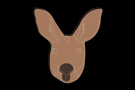 Drawing of a kangaroo. Kangaroo head full face. Simple linear drawing of a kangaroo. Wild animal