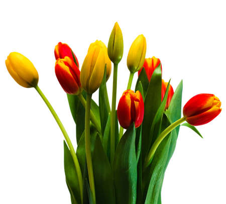 Bouquet of tulips on isolated white background Stock Photo