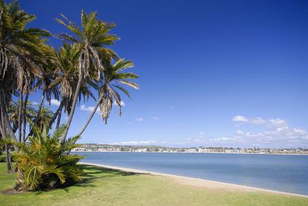 san   diego: Palms on the beach of Mission Bay, San Diego, California. Stock Photo
