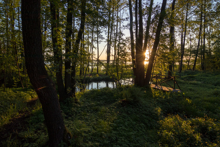 Beautiful sunrise on the edge of forest with pond near the lake