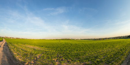 Green filed in the countryside at summer evening