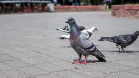 A slender young dove look into camera Zdjęcie Seryjne