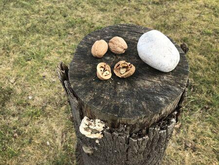 Nut cracking set